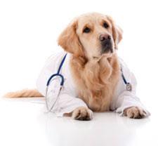senior pets program