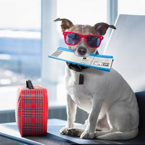 Prepare Pet for the Air Travel